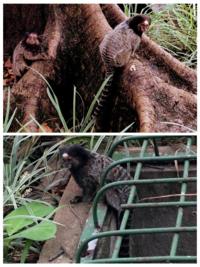 この動物は世界的には珍しい動物でしょうか?また、日本の動物園にいますか?