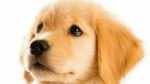 犬が無職転生しても、知恵袋で質問三昧の日々ですか?