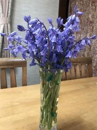 これは何という花でしょうか? 実家の庭に毎年咲き、母はムスカリだと言っていましたが違うような気がするので。