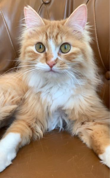 この猫の種類を教えてください