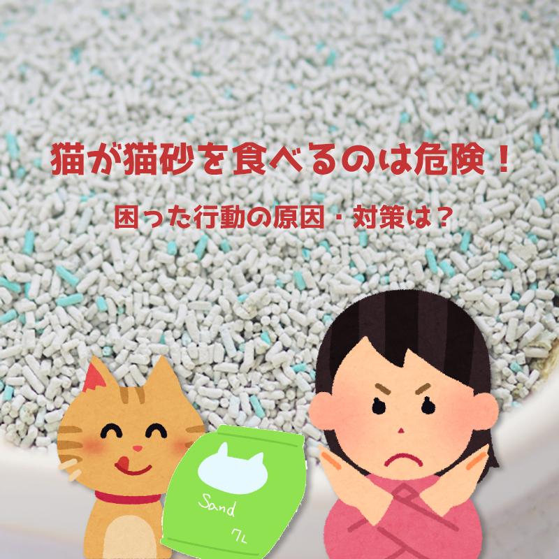 猫は猫砂を 食べてしまう おバカな生き物ですか? (ΦωΦ)