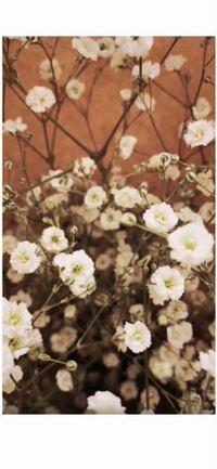 ティックトックで見かけたのですが、この花の名前はなんですか??