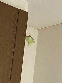 家の中にいたんですけど、なんていう生き物ですか??