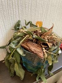 観葉植物を復活させる方法を教えてください。  私が出産のため入院と里帰りしている2週間の間に観葉植物が写真のようになっていました。 一昨日自宅に一時帰宅した際に発見し、水をあげ、茶色くなった葉を取りましたが、本日みてもこの写真の状態です。  この状態からでも復活する方法はあるでしょうか?   この観葉植物は、3年前、ワークショップで上の子が3歳の頃に自分で植物を選び、砂を入れて...