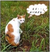 猫替え歌だよん 何の歌かわかるかニャ? (ΦωΦ)  もう、おバカだわ チミが 小さく見える (ΦωΦ)