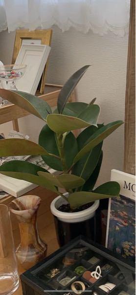 この観葉植物の名前と育て方を教えてください
