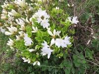 この花の名前を教えてください。宜しくお願いいたします。