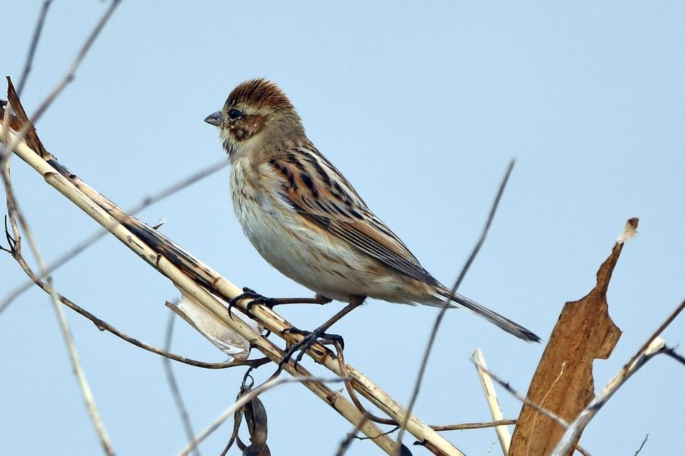 この野鳥の名前をご存知の方、教えてください。