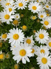 カテゴリマスター sie さんへ 今度こそ間違えずに送ります。  葉っぱ が映った写真送ります  お花の名前を教えて下さい