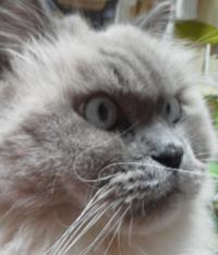 大喜利 ウチの猫なにを見ている?