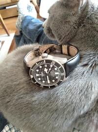 今日の時計は何ですか?