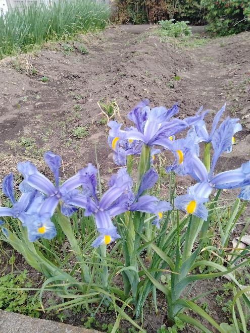 このお花は何という名前ですか?