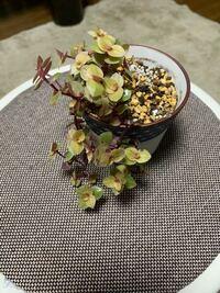 この植物の名前を教えてください