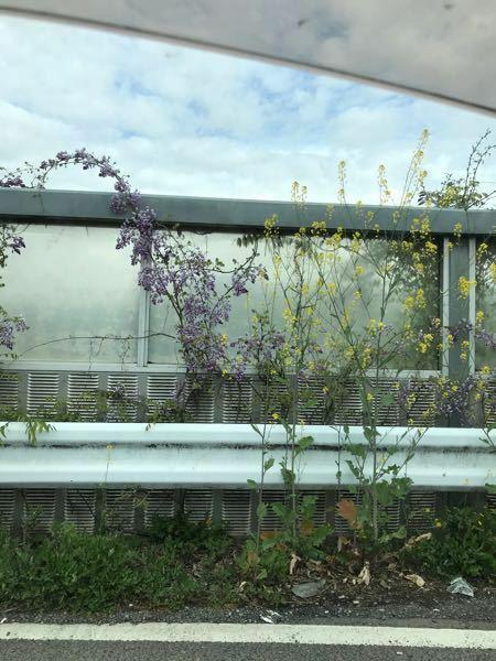 この紫の花がついた植物の名前を教えてください