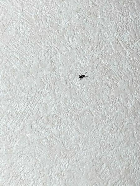 壁を這ってたのを見つけました。 これは ゴキブリの赤ちゃんでしょうか?