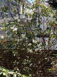 この白い花を咲かせる植物の名前が知りたいです