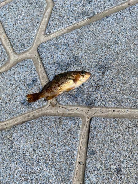 これはなんという魚かわかりますか?
