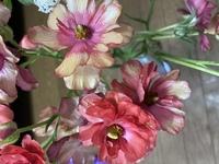 切り花を買って来たのですが、このコスモスに似た花の名前をお分かりになる方、教えて頂けると助かります。画像をご覧に下さい。