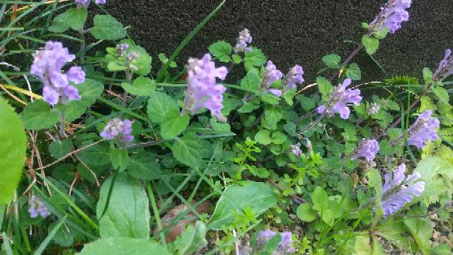 この植物の名前をお願い致します。