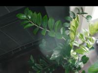 この観葉植物の名前を教えていただけないでしょうか よろしくお願いします。