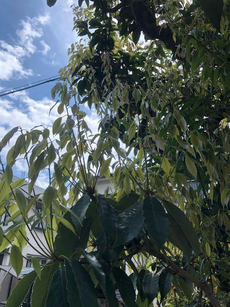 これはなんていう木でしょうか? また、どういった特徴の木など ご存知でしたら教えて頂きたいです。
