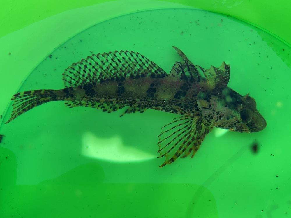 堤防釣りで釣りました。 この魚の名前を教えてください。
