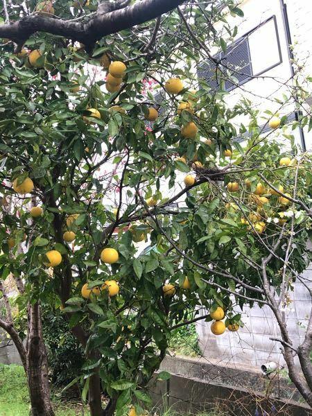 家に果実が実ってるんですが、母が何を植えたか忘れたそうで、酸っぱくて苦いんです…(笑)どなたかわかる方よろしくお願いします! あと、何か使い道がわかれば(レシピとか)嬉しいです(笑)