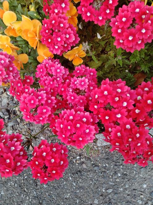 この花の名前を教えてください?