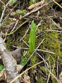 この植物は何ですか?函館の人が見せてくれた写真です。