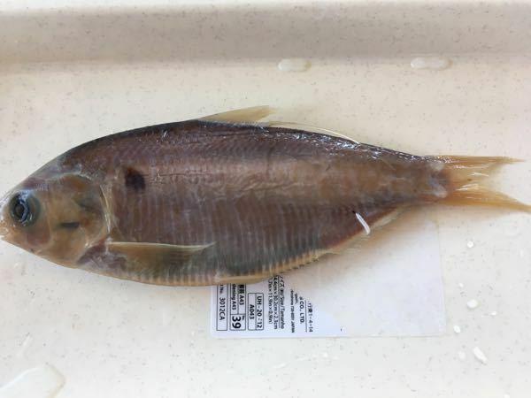 これは何という魚ですか?? 背鰭に一本長い糸状のものがあります。