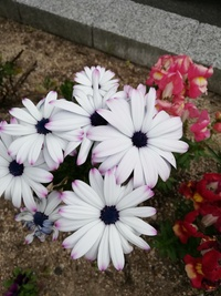 特徴ある花ですが、なんていうものですか??