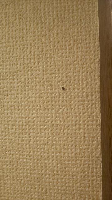 これはなんて言う虫ですか? トイレの壁にいました。
