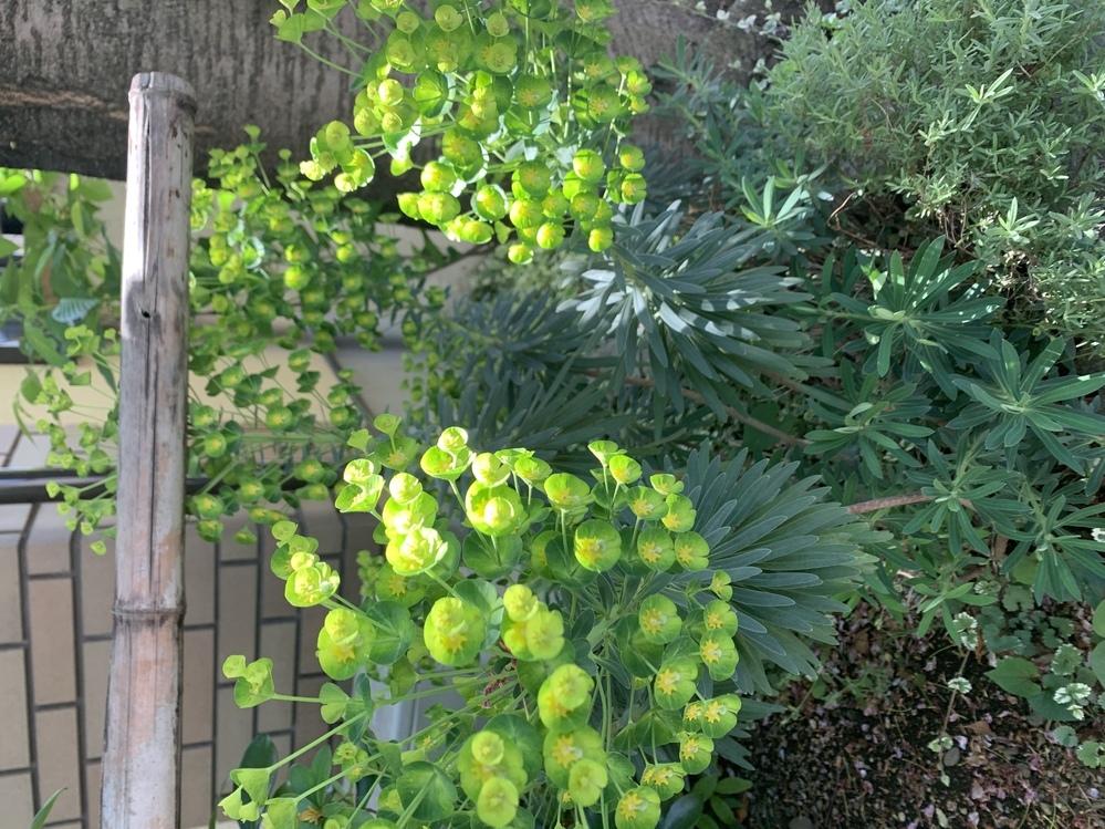この植物の名前を教えてください。花屋では分からなくて。よろしくお願い致します。