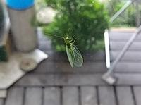 この虫は何という名前ですか? 見た目は可愛いけど、触ったら異様な匂いがしました・・・(笑)