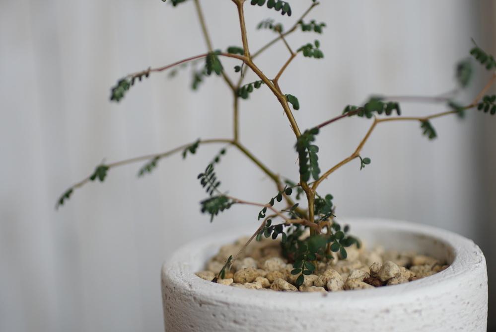 観葉植物の話し この植物はなんて名前ですか?