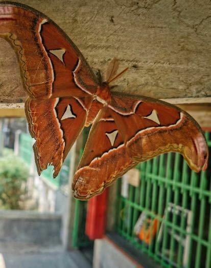 この昆虫の名前を教えてください♪