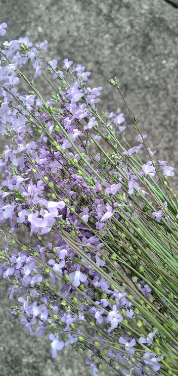【画像あり】この植物はなんですか?