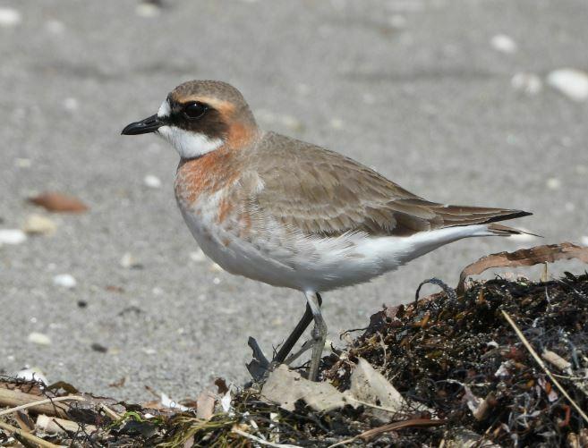 本日撮影したこの鳥の名前は何ですか?
