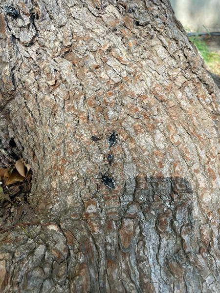 木にいるこの虫は何でしようか?