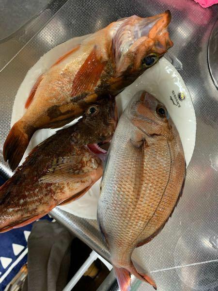 初タイラバで釣れました 凄くないですか?辛口評価お願いします
