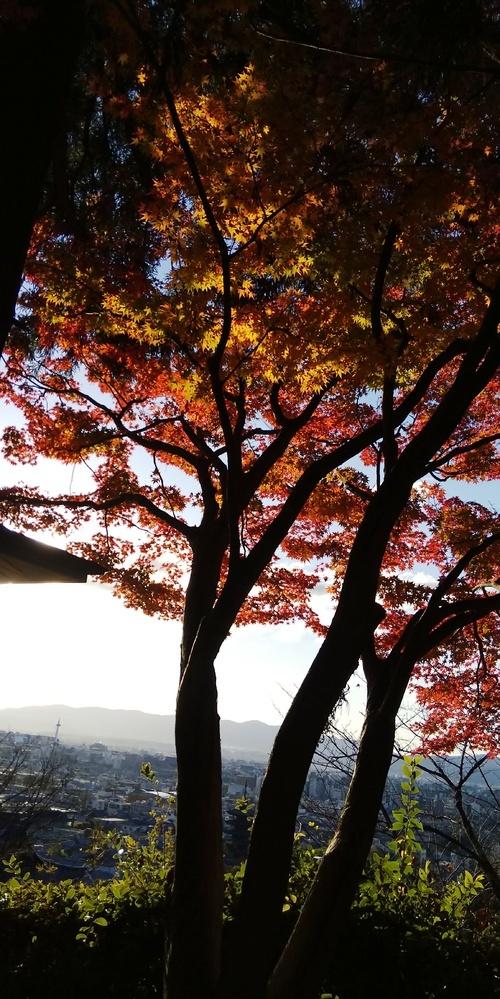 これどこから撮った写真でしょうか? 遠くに京都タワーらしきものが見えますし、光の具合からして夕方かな? 亡くなった父親の保存DVDからでてきた一枚です。このほかに清水寺の 写真だけは私もわかりました。DVDに京都旅行と書いてありました。