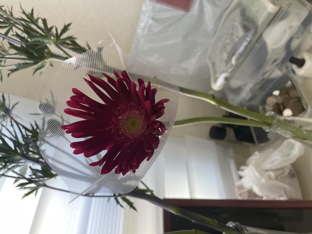 こちらの2つは何ていう花でしょうか?