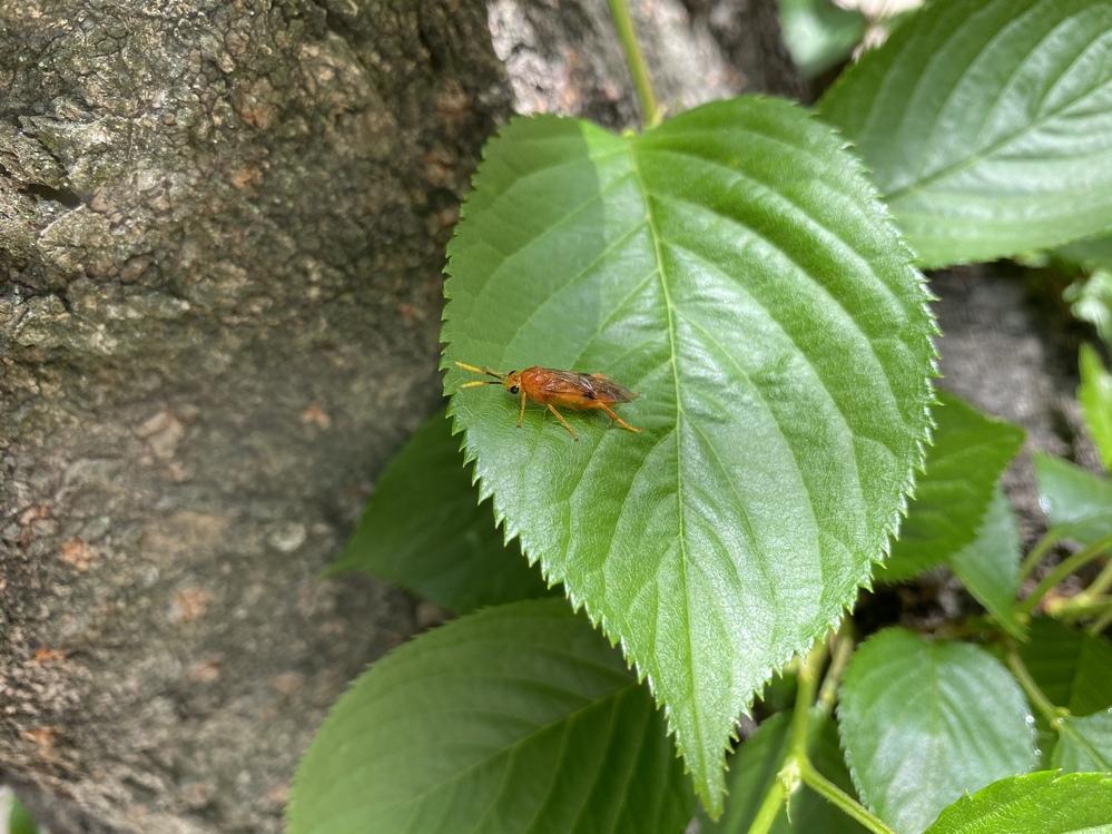 はじめまして! 子どもが公園で見つけました。 図鑑などにも載っておらず、、 この虫の名前を知りたいです。 何卒よろしくお願いします。