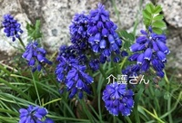 この花の名前は何ですか? 撮影日は2021年4月8日、撮影場所は兵庫県です。 よろしくお願いします。