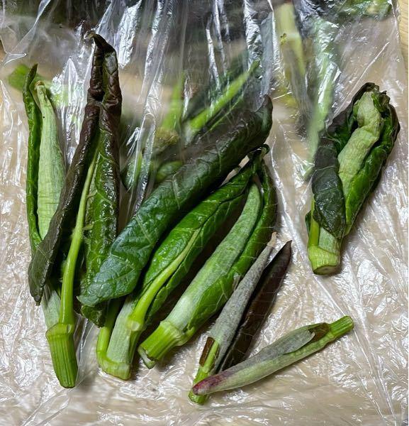 この山菜なんだかわかりますか? ご飯を食べに入ったお店で、 新作メニューを頼んだら、 会計時に感想・意見を求められ、 お礼に山菜を戴いたのですが、 山菜の名前が聞き取れませんでした。 何て名前かあわかる方教えて下さい。