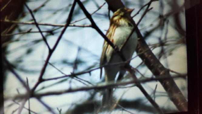 山で撮影した写真です。 画像が荒くてすいませんが この野鳥の名前はなんですか よろしくお願いします。