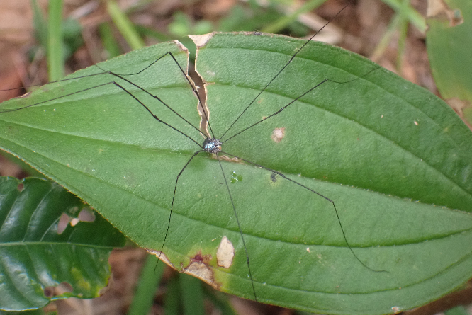 この虫の名前教えて下さい。