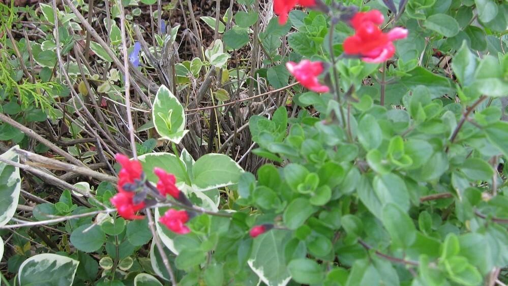 散歩中に見つけました、赤い花の名前分かりますか?教えてください。