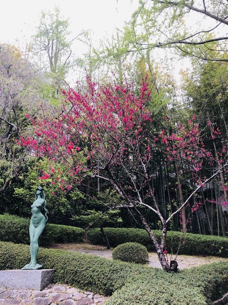 彫刻の脇に咲いてる赤い花の名前、教えてください。よろしくお願いいたします