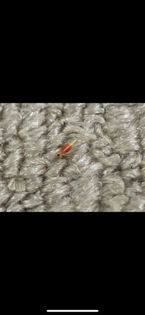 これはなんて言う虫ですか? ぴょんぴょん跳ねました!!